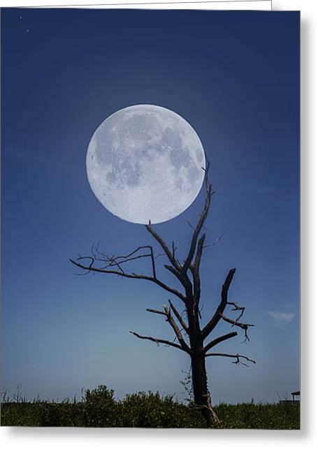 Enhanced Greeting Cards - Moon Stuck In A Tree Greeting Card by Brian Wallace