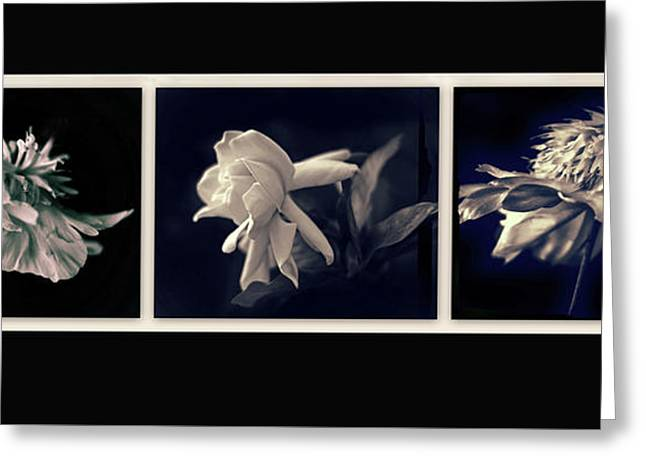 Moonglow Triptych Greeting Card by Jessica Jenney