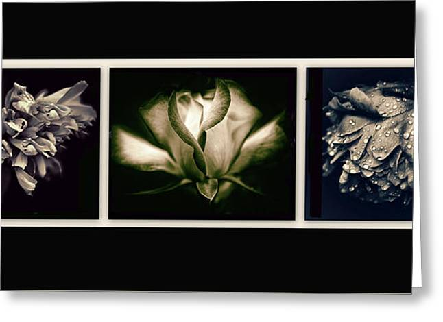 Moonlight Petals Triptych Greeting Card by Jessica Jenney