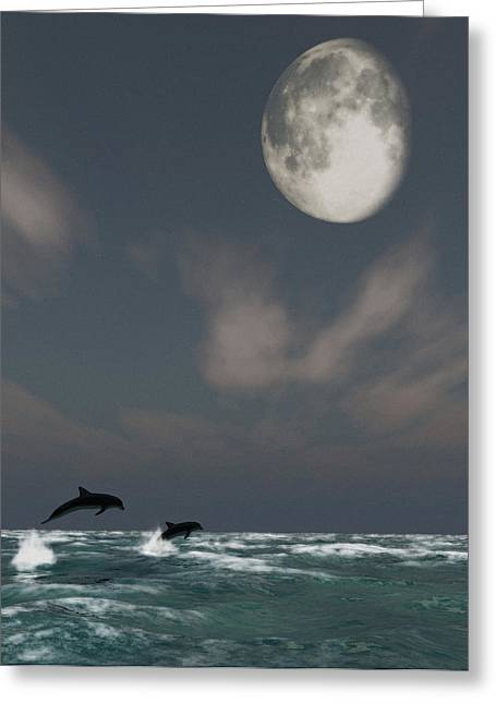 Ocean Images Greeting Cards - Moonlight Swim Greeting Card by Richard Rizzo