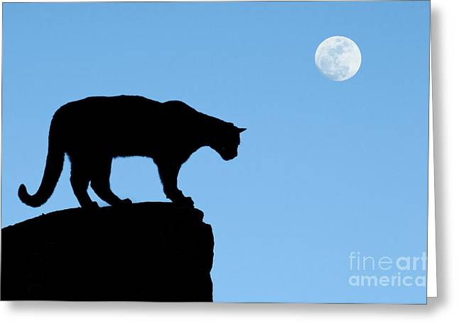 Puma Concolor Greeting Cards - Moonrise and Cougar Greeting Card by Sandra Bronstein