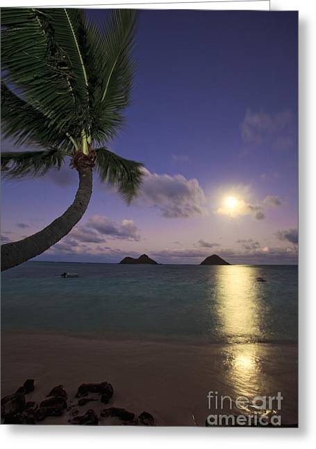 Eerie Greeting Cards - Moonrise and Palm Greeting Card by Tomas del Amo - Printscapes