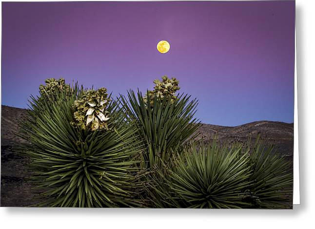 Moonrise Over Joshua Tree Greeting Card by Jean Noren