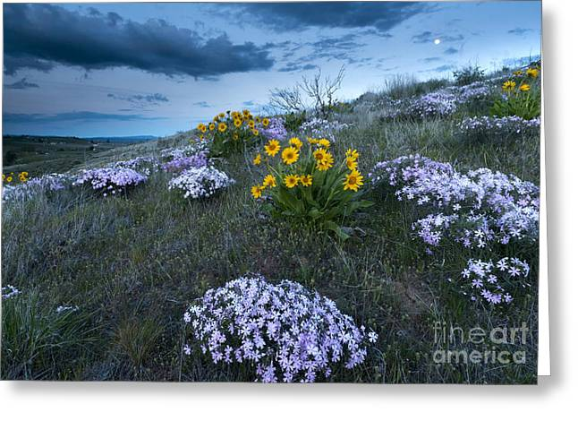 Phlox Greeting Cards - Moonrise over Snow Mountain Ranch Greeting Card by Mike Dawson