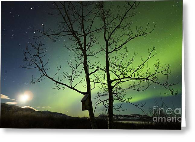 Aurora Lake Greeting Cards - Moonset And The Northern Lights, Yukon Greeting Card by Philip Hart