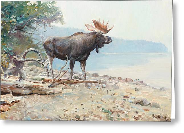 Philip Goodwin Greeting Cards - Moose at Lake McDonald Greeting Card by Celestial Images