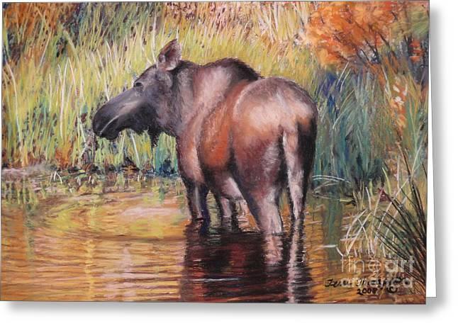 Moose In Alaska Greeting Card by Terri Thompson