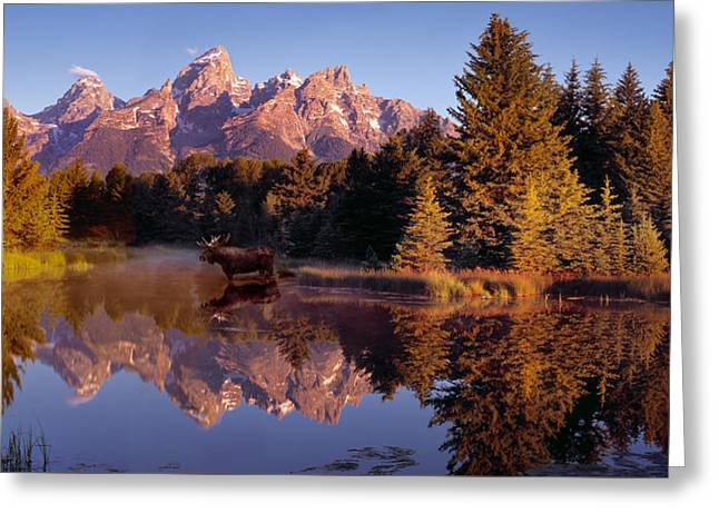 Recently Sold -  - Snow Capped Greeting Cards - Moose Tetons Greeting Card by Leland D Howard