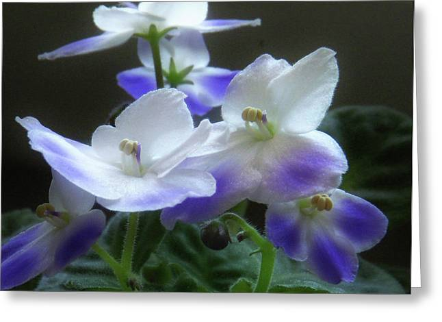 Realistic Pyrography Greeting Cards - More Sweet Violets Greeting Card by Margaret Wingstedt