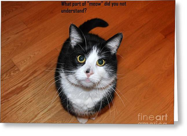 Cat Prints Greeting Cards - More Words From  Teddy the Ninja Cat Greeting Card by Reb Frost