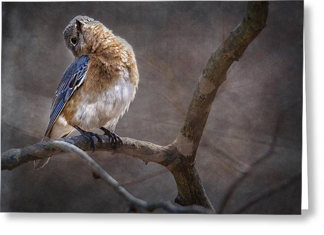 Bird In Tree Greeting Cards - Morning Bluebird Song Greeting Card by Bill Tiepelman
