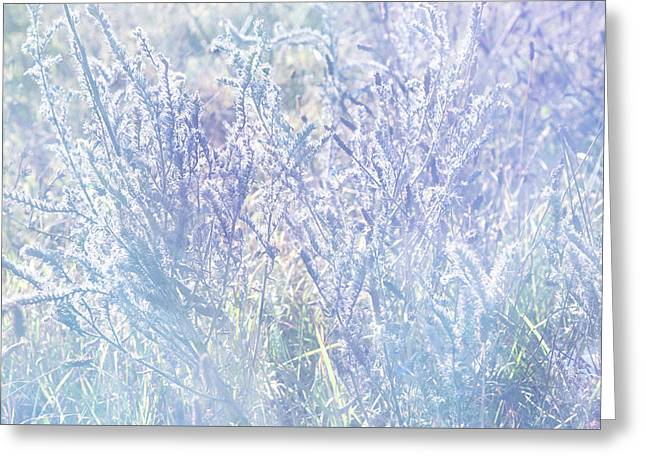 Morning Blues Of Wild Flowers Greeting Card by Jenny Rainbow