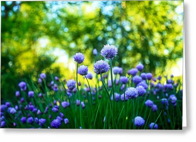 Rumpled Greeting Cards - Morning chives Greeting Card by Lynn Hopwood