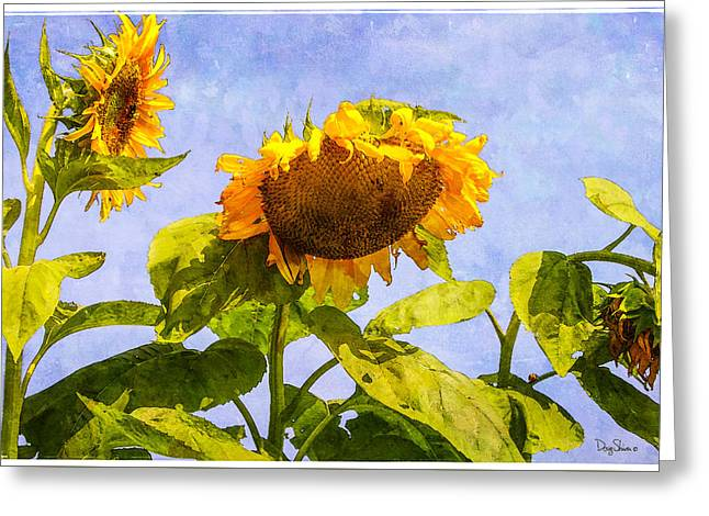 Yellow Sunflower Greeting Cards - Morning Conversation Greeting Card by Doug Shiver