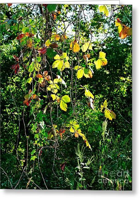 Botanical Greeting Cards - Morning Creeper Greeting Card by Gary Richards