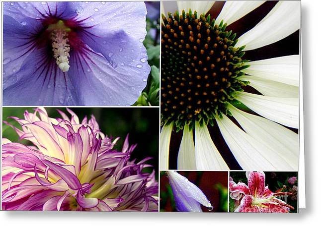 Best Sellers -  - Pinks And Purple Petals Greeting Cards - Morning Delight Greeting Card by Priscilla Richardson