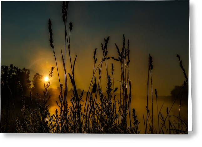 Morning Dew On Tall Grass Greeting Card by Chris Bordeleau