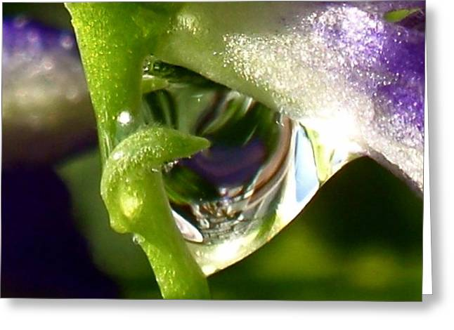 Morning Dew Greeting Card by Rona Black