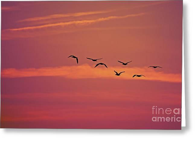New Greeting Cards - Morning Flight.. Greeting Card by Nina Stavlund