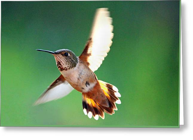 Flying Animal Greeting Cards - Morning Flight Greeting Card by Rory Sagner