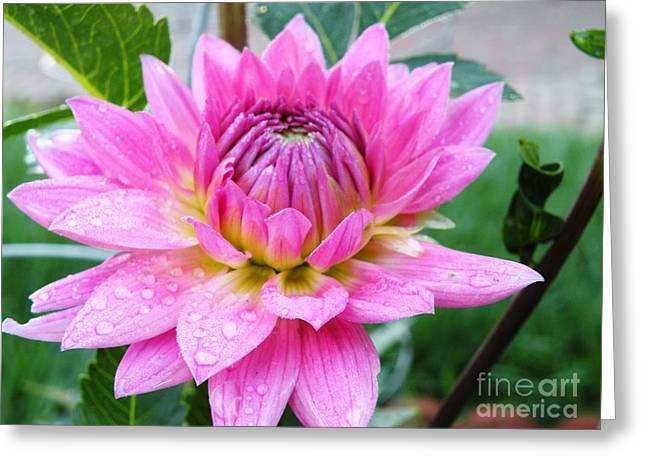 Raindrops On Flowers Greeting Cards - Morning Flower After the Storm Greeting Card by Christine Belt