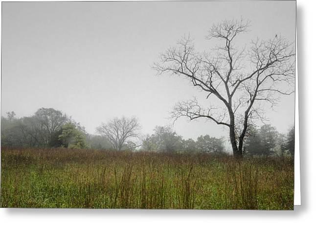 Morning Fog Greeting Card by Ryan Heffron