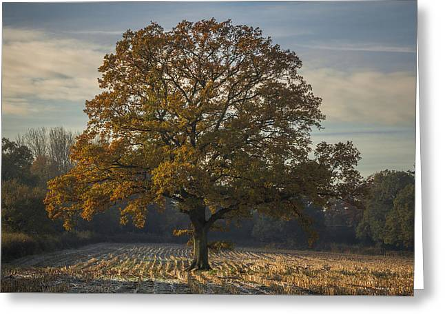 Singular Greeting Cards - Morning frost Greeting Card by Chris Fletcher