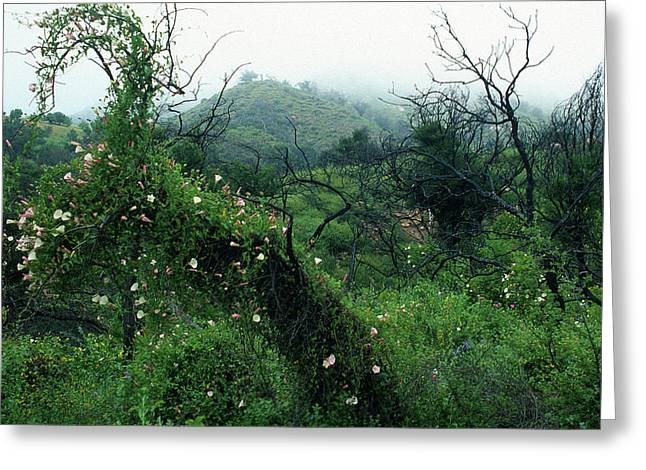Landscape Framed Prints Greeting Cards - Morning Glories in Fog Greeting Card by Kathy Yates