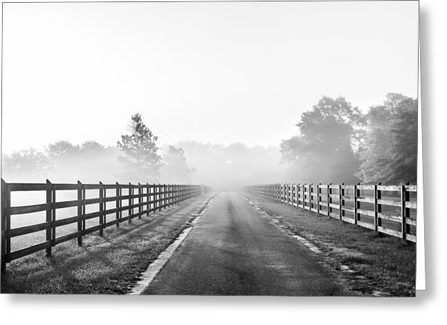 Dazed Greeting Cards - Morning Glory Monochrome Greeting Card by Shelby  Young