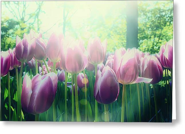 Keukenhof Gardens Greeting Cards - Morning Glory Greeting Card by Ryan Wyckoff