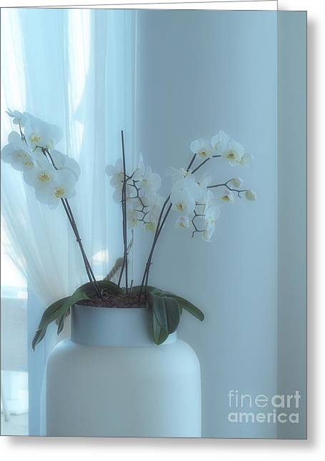 White Curtain Greeting Cards - Morning Glow Greeting Card by Joyce Hutchinson