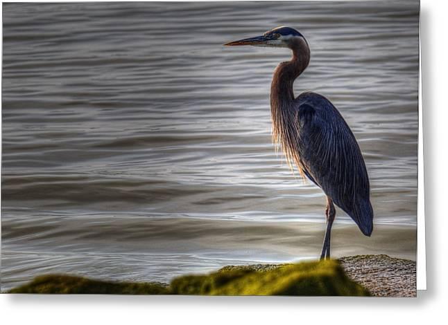 Algae Greeting Cards - Morning Heron Greeting Card by Randy Hall