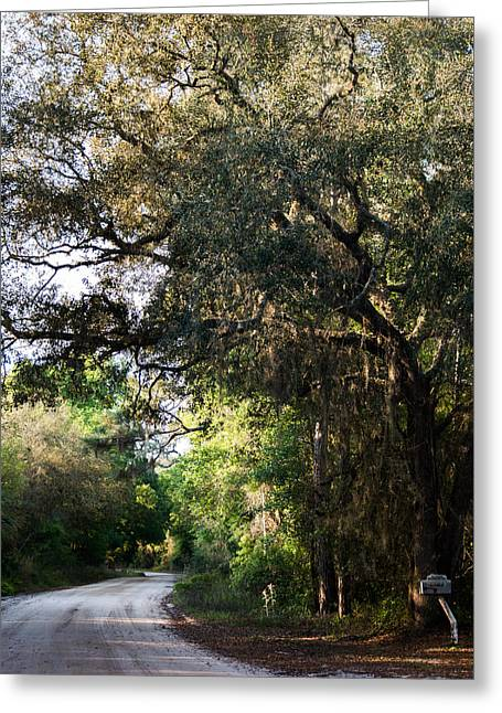 Jogging Greeting Cards - Morning in Florida Greeting Card by Parker Cunningham