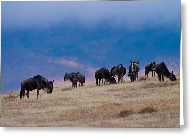 Serengeti Animal Greeting Cards - Morning in Ngorongoro Crater Greeting Card by Adam Romanowicz