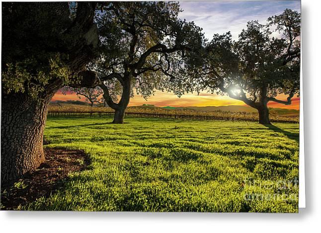 Morning In Wine Country Greeting Card by Jon Neidert