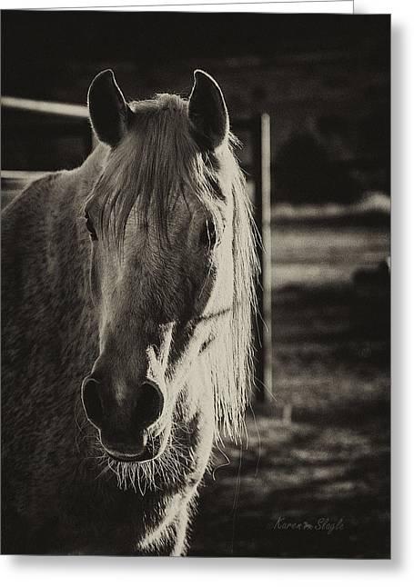 Gray Hair Greeting Cards - Morning Light Greeting Card by Karen Slagle