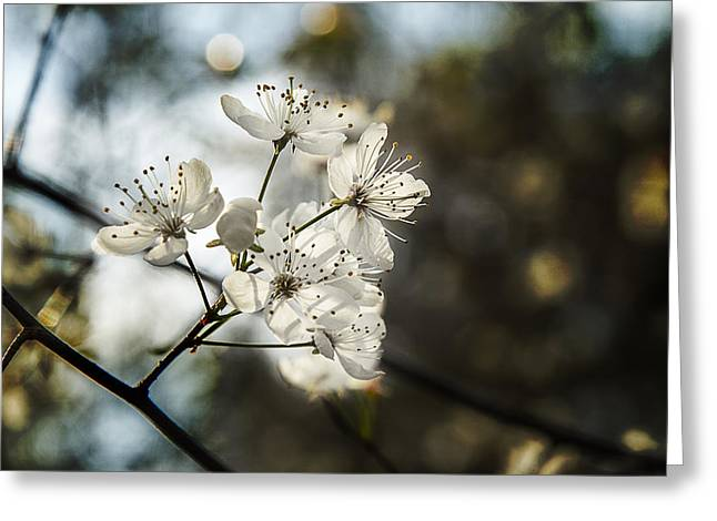 Stamen Digital Greeting Cards - Morning Light On The Dogwood Greeting Card by Barry Jones
