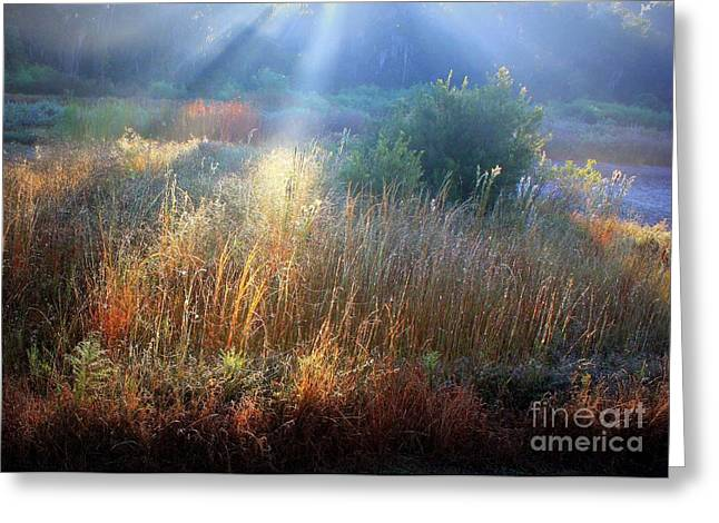 Morass Greeting Cards - Morning Light on the Marsh Greeting Card by Carol Groenen