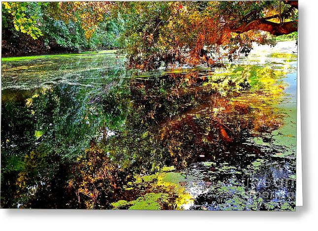 River View Greeting Cards - Morning Light on the Murky Water Greeting Card by Joan Kaplan