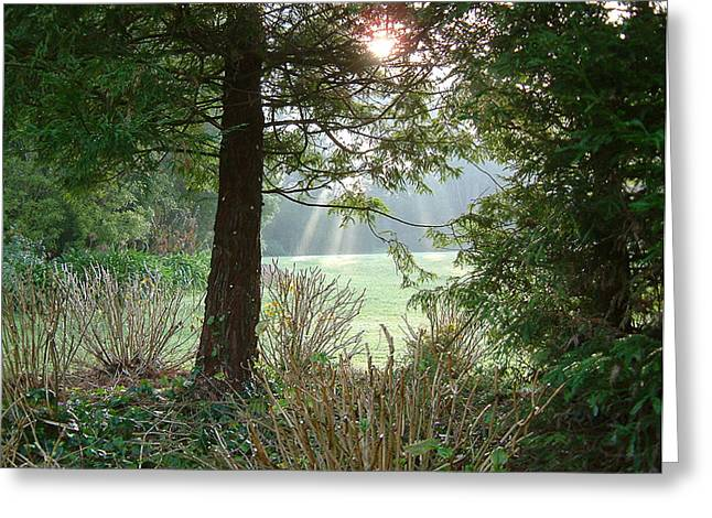 Wonderous Greeting Cards - morning light rays in Golden Gate Park Greeting Card by Michael Roll