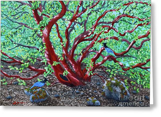 Open Space Greeting Cards - Morning Manzanita Greeting Card by Laura Iverson