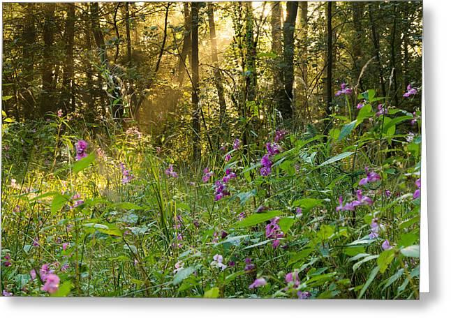 Woodland Scenes Greeting Cards - Morning Mist - Entwistle Reservoir, Lancashire, UK. Greeting Card by Daniel Kay