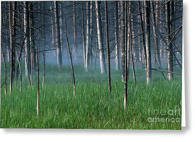 Morning Mist In Yellowstone Greeting Card by Sandra Bronstein