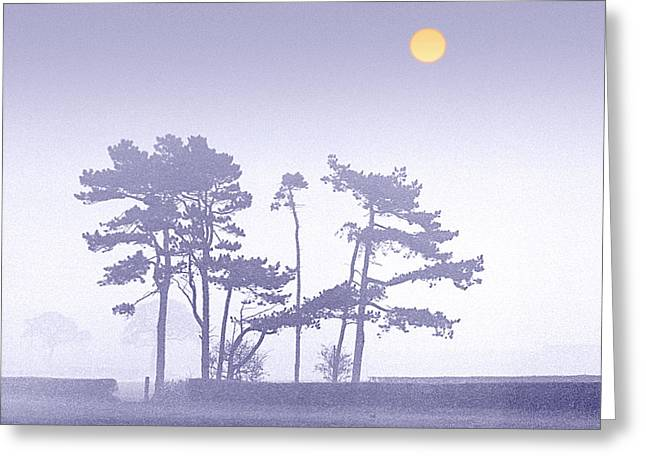 Pine-mist Greeting Cards - Morning Mist Greeting Card by Peter OReilly