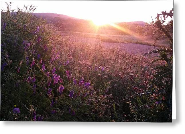 Sunlight On Flowers Greeting Cards - Morning on the Mountainside II Greeting Card by Maria Urso