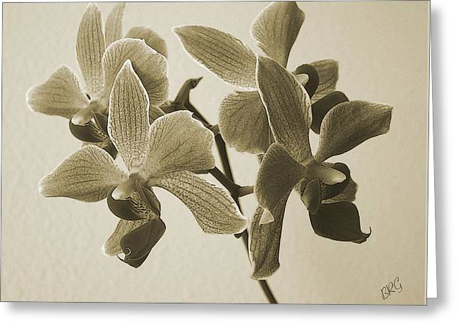 Ben Gertsberg Greeting Cards - Morning Orchid Greeting Card by Ben and Raisa Gertsberg