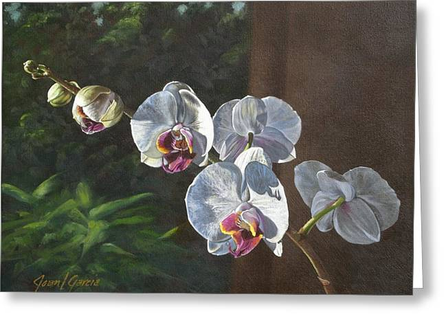 Morning Phaleanopsis Greeting Card by Joan Garcia