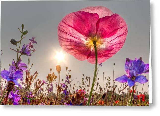Morning Pink Greeting Card by Debra and Dave Vanderlaan