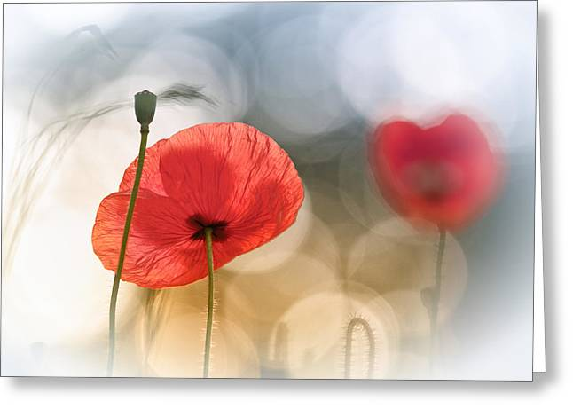 Morning Poppies Greeting Card by Steve Moore
