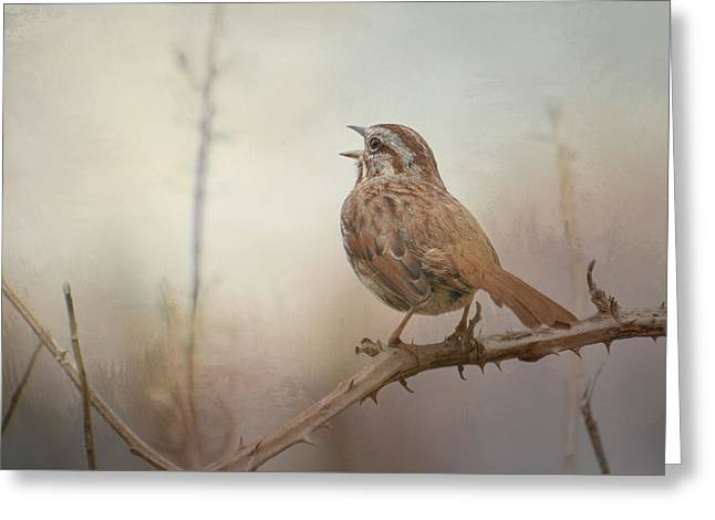 Sparrow Greeting Cards - Morning Reverie Greeting Card by Fraida Gutovich
